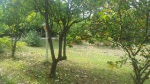 ویلا باغ سرخرود ساحلی کد 937