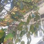 ویلا زیرقیمت آمل کد 72