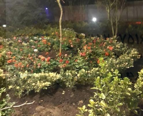 ویلا باغ جنگلی آمل